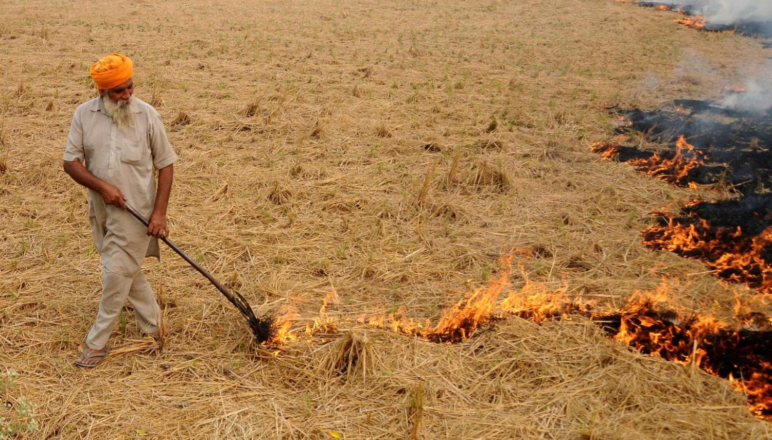 burning of crops